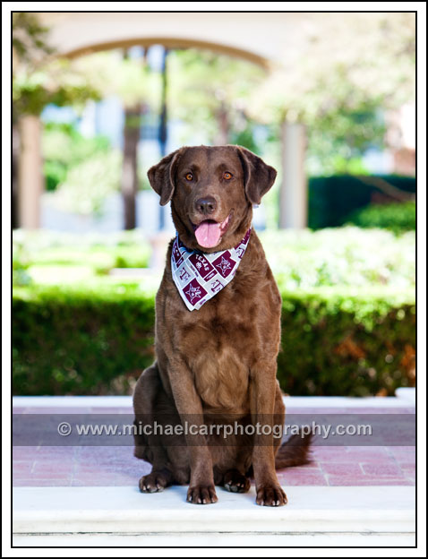 Houston Pet Photography
